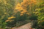 AutumnBridge
