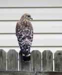 bird of prey, nature