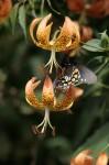 Butterfly-681x1024