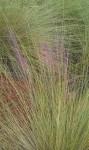 Beach grass, landscape