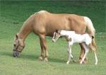 Mom&BabyHorse