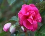 PinkFlower_1
