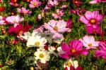Flowers, spring flowers, South Carolina