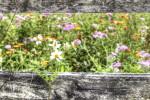 spring, flowers, pasture, Florida