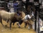 Cowboy, rodeo, bull rider, PBR