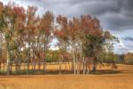AutumnFields