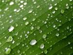 rain drops, texture, leaf