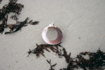 Sea Shell, beach, sand, Atlantic ocean, Florida