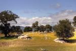 scenery, landscape, oak trees, California