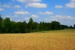 landscape, wheat, barley, farm, ranch, south carolina