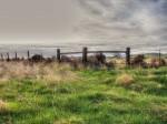 Rustic, landscape, ranch, range land, grassland, California