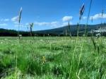 landscape, scenery, Tuolumne meadow, Yosemite, California